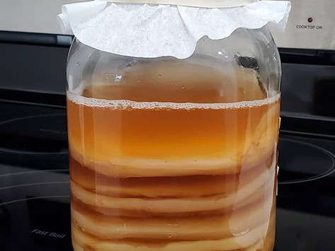 How to Make and Maintain a SCOBY Hotel
