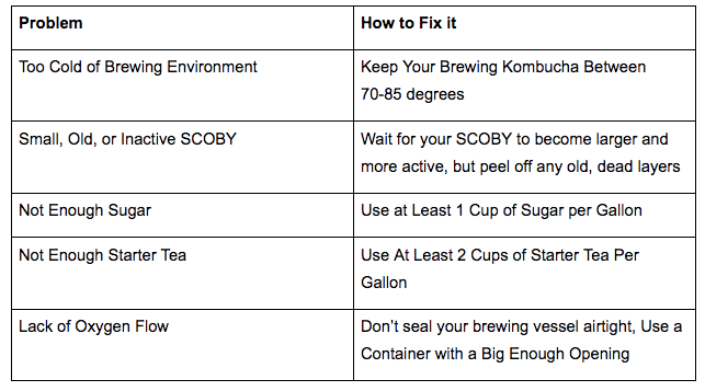 kombucha fermentation tips