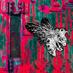böcek2