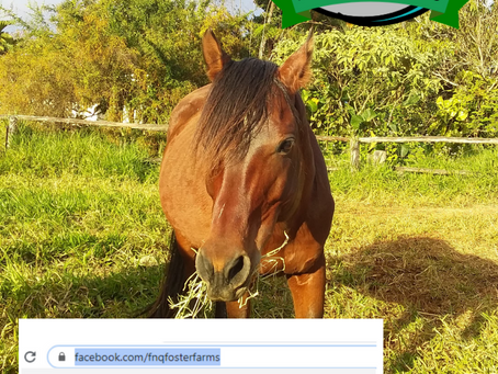 FNQ Foster Farms Facebook Fail
