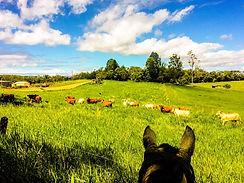 FNQ Foster Farm.jpg