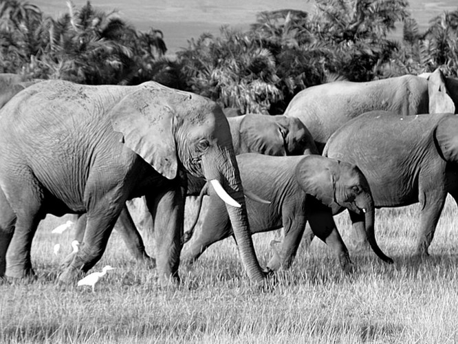 Amboseli - Kenia - 2004