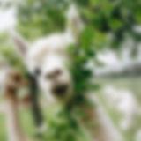 farmcrawl_june2-24_edited.jpg