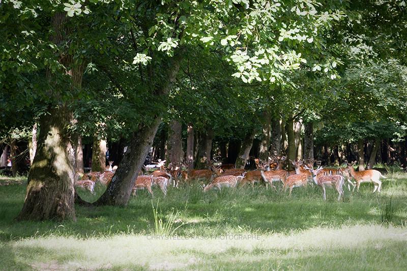 Le parc du Chateau du Monceaux