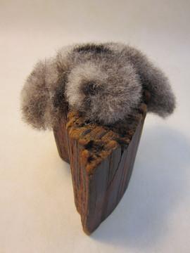 Fungish