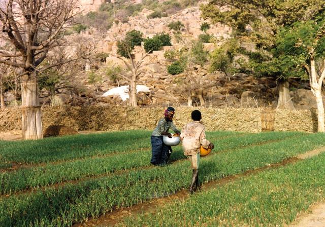 planting-saplins-w640h480
