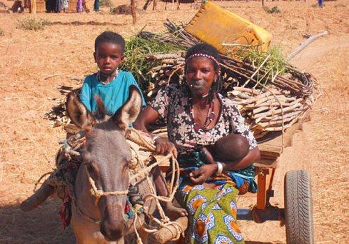 A Donkey-Cart