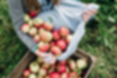 Apples%20in%20a%20Crate_edited.jpg