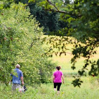 Couple walks through orchard