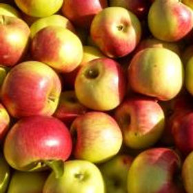 Viking Apples.jpeg