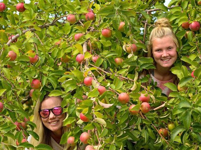 Girls peek through trees