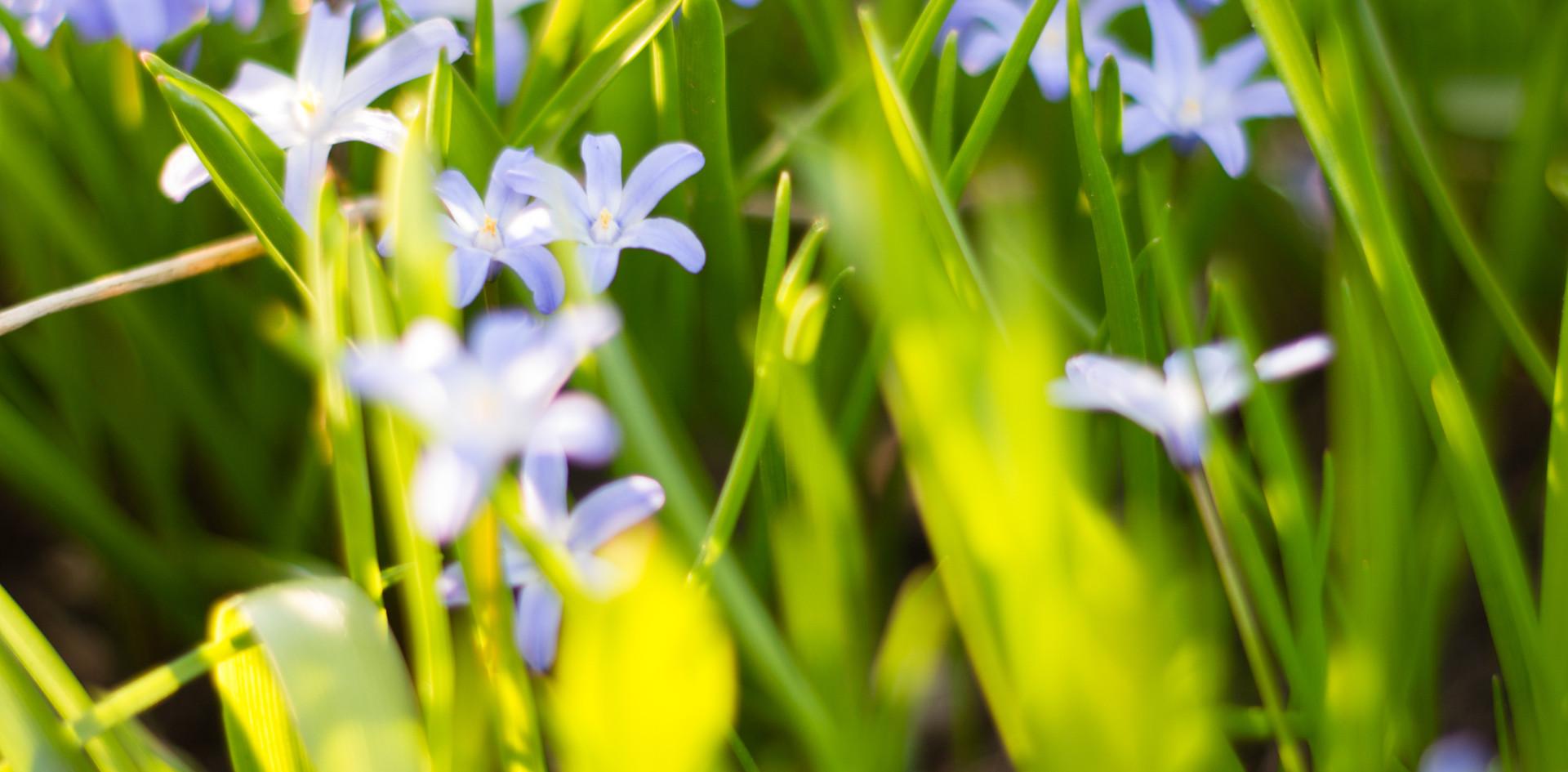 May Garden (9 of 44).jpg