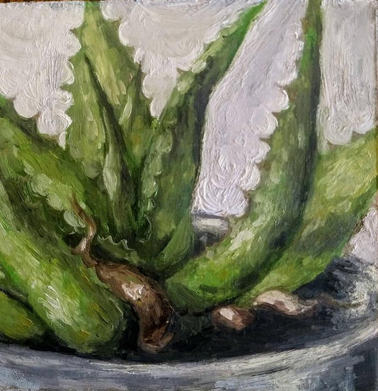 Study of an Aloe