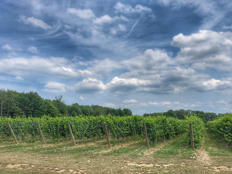 Napa Valley of The East in Northeast Ohio