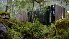 Os cripto-contêineres  submersos nas sombras de uma floresta