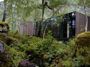 Os cripto-containers submersos nas sombras de uma floresta