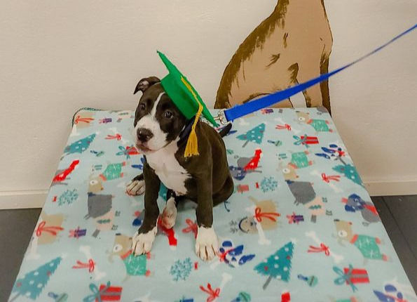 Puppy Preschool Thurs Sept 9th @ 7:45pm