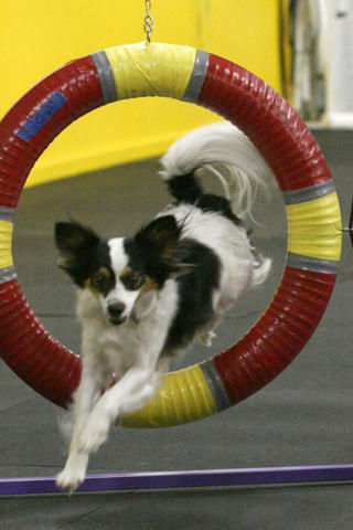 On Going Agility Current Students ONLY
