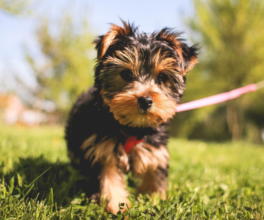Puppy Class, Oct. 28th 7:45PM