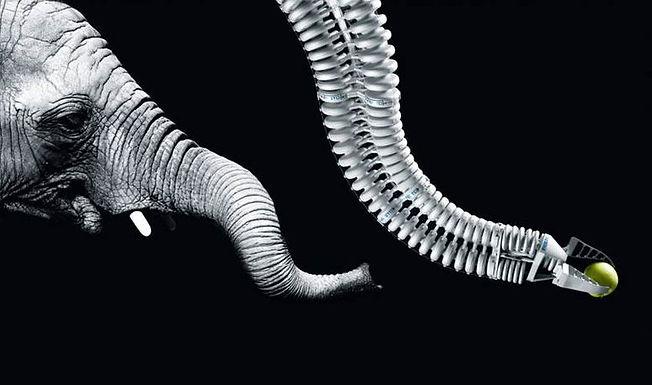 Biomimética: a arte de resolver problemas complexos mimetizando a natureza