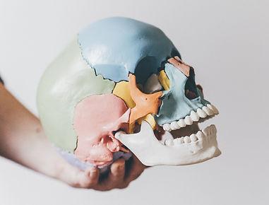 Cranio St. Pölten