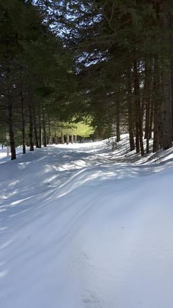 Jeu d'ombre sur la neige