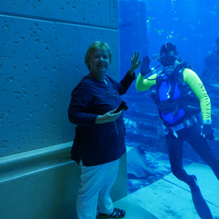 Het aquarium.JPG