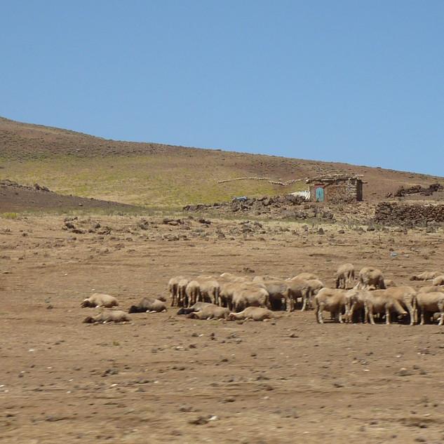 Zuid Marokko rondreis Saffraan Reizen.JPG