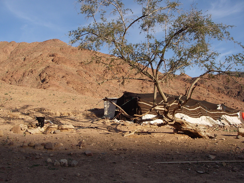 Bedoeïenentent Wadi Dana Trail, Jordanië - Saffraan Reizen