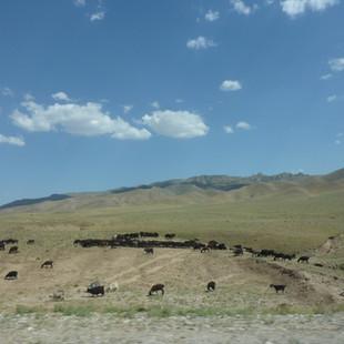 Platteland Oezbekistan.JPG