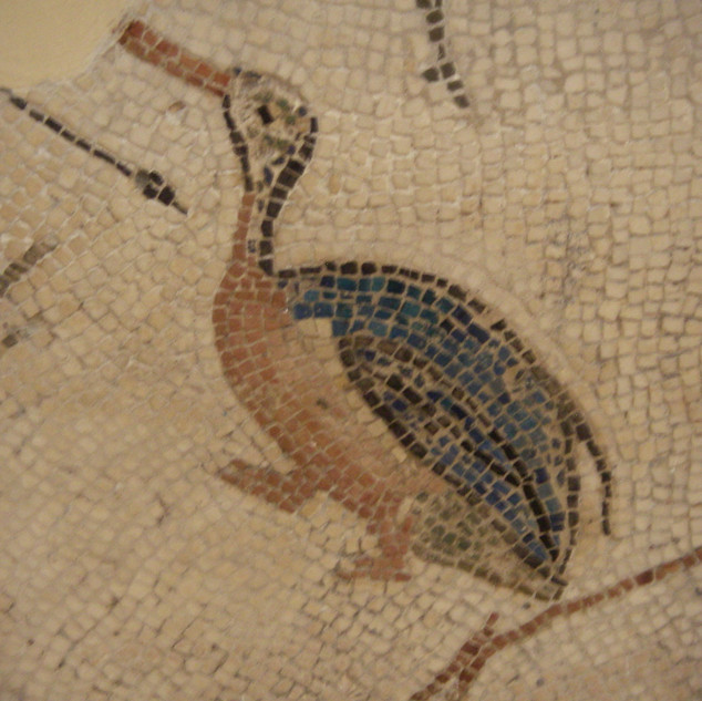 Museum El Jem.JPG