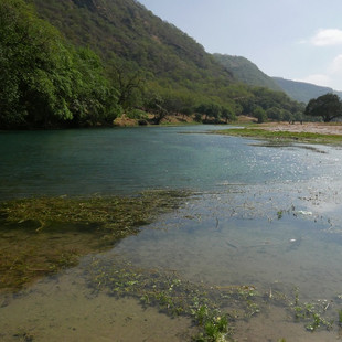 Oase van Wadi Dharbat, Dhofar, rondreis Oman.JPG