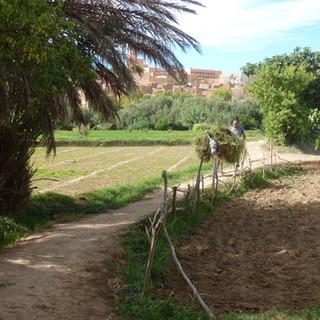 Tuinwandeling Rondreis Marokko Saffraan Reizen .JPG