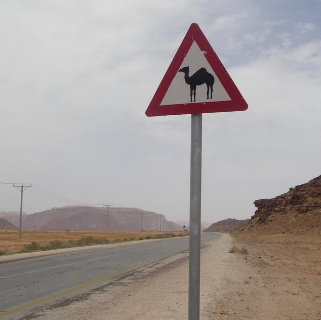 Overstekende kamelen in Wadi Rum, rondreis Jordanië.JPG