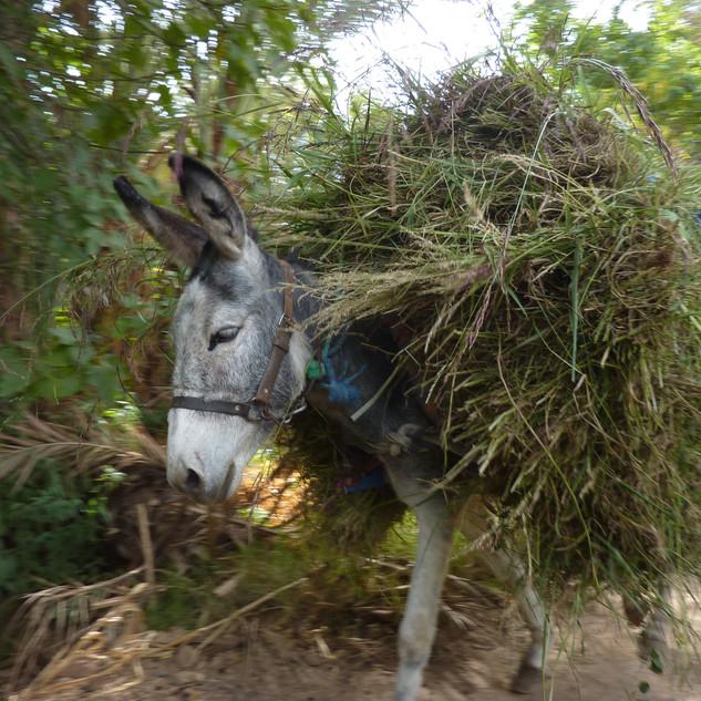 Wandelen in tuinen, Marokko.JPG