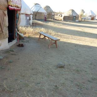 Yurtkamp rondreis Oezbekistan Saffraan Reizen .JPG