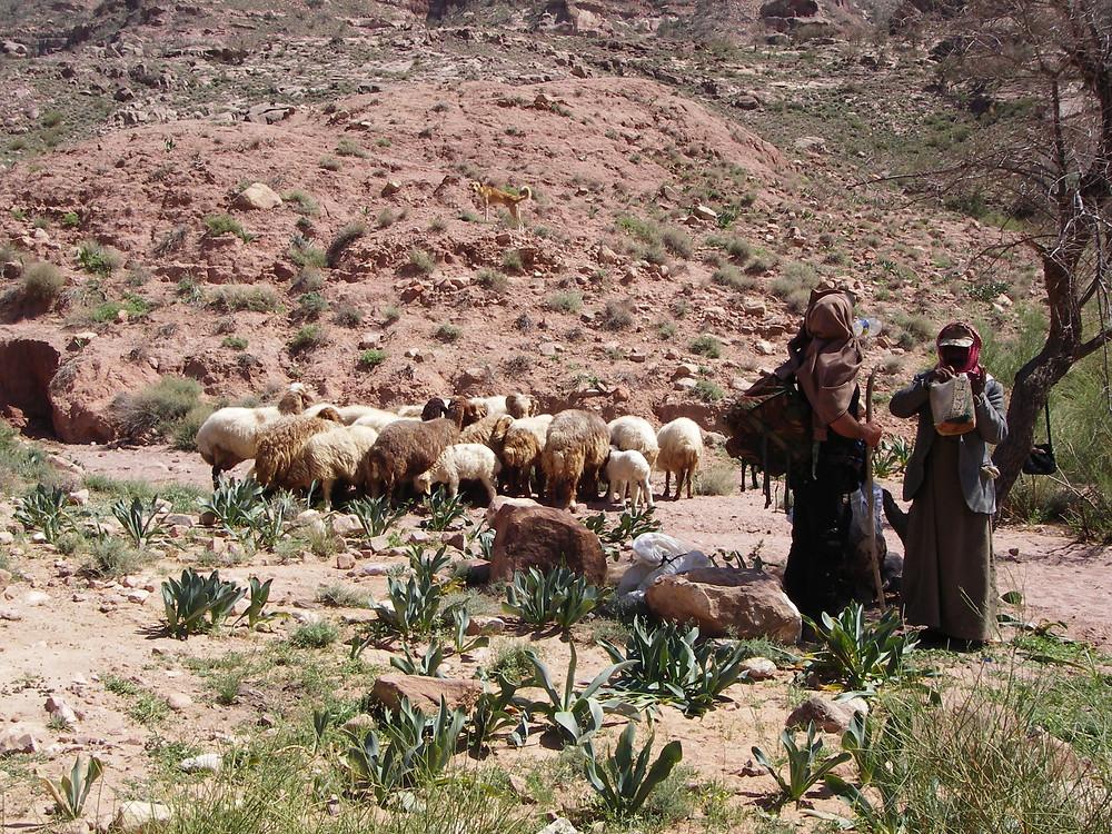 Herders op de Wadi Dana Trail, Jordanië - Saffraan Reizen