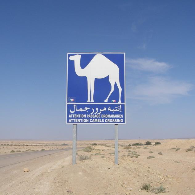 Overstekende kamelen.JPG