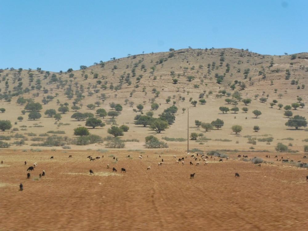 Naar Taliouine, Marokko - Saffraan Reizen