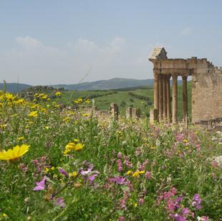 Zee van bloemen rondom het Capitool in D