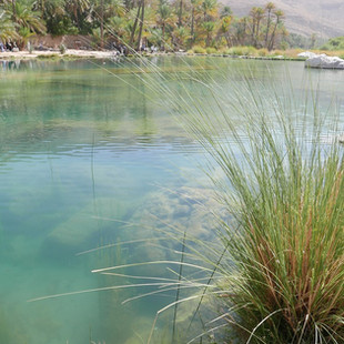 Wadi Bani Khalid, Oman.JPG
