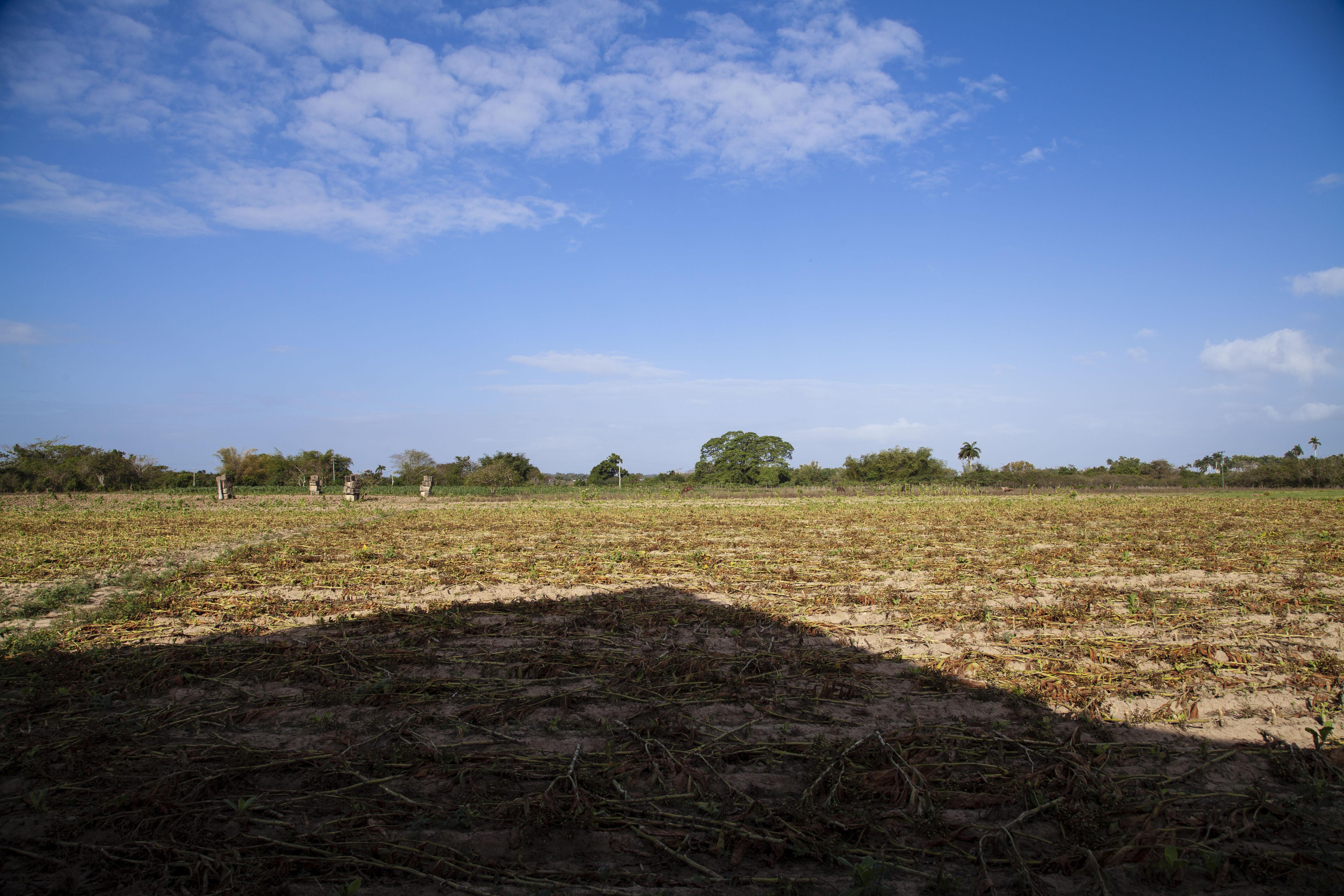 Nos campos do Sr. Sanches (II)