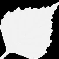 Birkmann Clinic Logo White.png