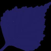 Birkmann Clinic Logo Blue.png