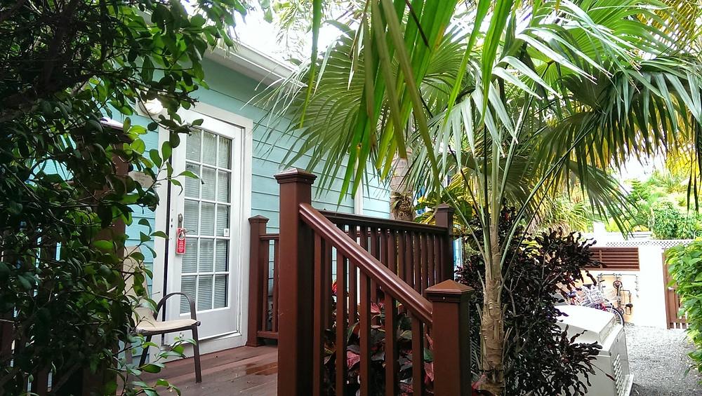 Traveler's Palm in Key West