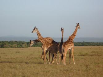 Kenya Bölüm II