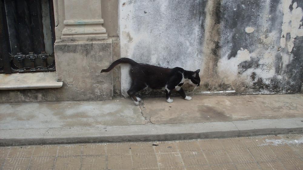 Cat in Recoletta Cemetary