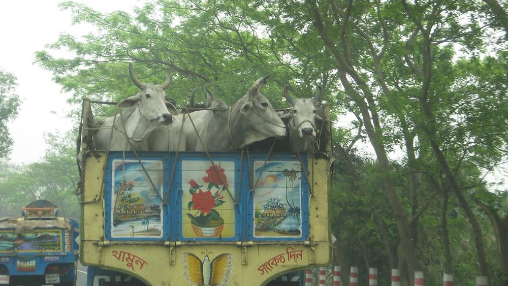 Picasa - Bangladesch 374.jpg