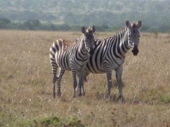 Kenya Part I