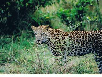 Kenya Part VI